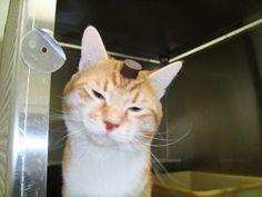 cat experiments at University of Utah