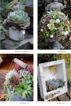 succulents, inspirations