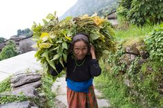 Look at the tough manual work woman like this young lady have to endure in Nepal. Thankfully iDE UK's work is making their lives easier by providing enterprise-based solutions in an attempt to end poverty. www.ide-uk.org