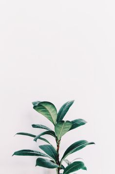 The Well Library: Dietitian Approved Toolkit Filled With Healthy Living + N. The Well Library Iphone Wallpaper Plants, Aesthetic Iphone Wallpaper, Aesthetic Wallpapers, Plant Aesthetic, White Aesthetic, Simple Aesthetic, Cactus Plante, Plant Background, Green Leaf Background