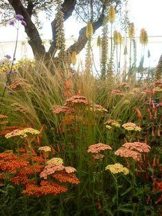 Stipa barbata, achillea (von www. Landscape Design, Garden Design, Art Du Monde, Full Sun Perennials, Cottage Garden Plants, House Plants, Low Maintenance Landscaping, Garden Pictures, Ornamental Grasses