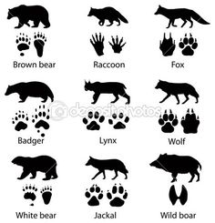 """Find """"wolf silhouette"""" stock images in HD and millions of other royalty-free stock photos, illustrations and vectors in the Shutterstock collection. Survival Life, Wilderness Survival, Survival Skills, Bushcraft Skills, Animal Footprints, Animal Tracks, Animal Silhouette, Clipart, Animals And Pets"""