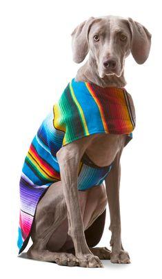 dog sweater extra large - Dog Clothes - Handmade Dog Poncho from Authentic Mexican Blanket by Baja Ponchos (No Fringe, XXL). Large Dog Clothes, Pet Clothes, Dog Clothing, Dog Items, Dog Wear, Dog Dresses, Dog Boarding, Dog Coats, Large Dogs