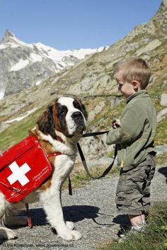 Hike with the dogs, Col Du Grand St Bernard