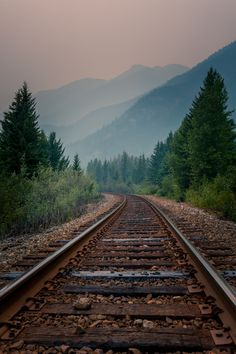 """renebhullar: """" Somewhere in Alberta August 2015 """" Railroad Track Photography, Nature Pictures, Cool Pictures, Train Tunnel, Train Tracks, Landscape Photos, The Great Outdoors, Railroad Tracks, Nature Photography"""