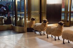 Peter Funch by vatkaco Photography Photos, Animal Photography, Francois Xavier, Artist Management, International Artist, Short Film, Animal Kingdom, Illustrators, Sheep