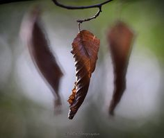 Low hanging leaves