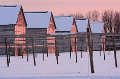 CONNECTICUT TOBACCO BARNS by I-C-THNGS (David Starling), via Flickr