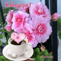 Good Morning, Rose, Flowers, Plants, Google, Buen Dia, Pink, Bonjour, Plant