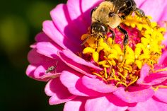 CNN: Bees placed on endangered species list - a first in the US - Health Nut News