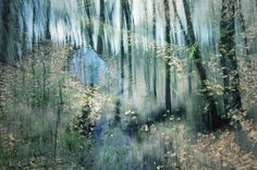 Stephanie Jung Photography - Nature