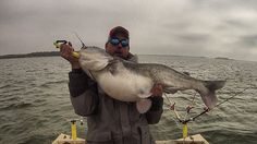 Catfish Edge Blue Catfish Photos Chad Ferguson fishing solo equipment testing on February 1st 2014  www.catfishedge.com   #fishing
