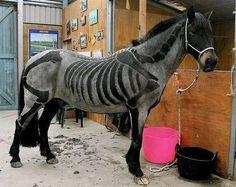 STRANGE HORSES - WHO TRIMMED ITS HAIR LIKE A SKELETON?