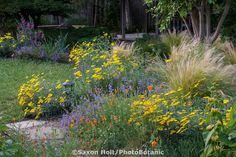 Mixed border with annuals, perennials, grasses, (poppies, penstemon, achillea, stipa) by small lawn in Habets garden, Pleasant Hill, California