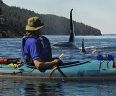 Awesome photo! What an awesome encounter this must have been!! This is the excitement and joy of whale watching! WOW!!    Blackberry (J-27)