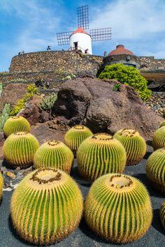 Cactus Garden in Guatiza Village, Lanzarote. #Lanzarote #CanaryIslands #cactus