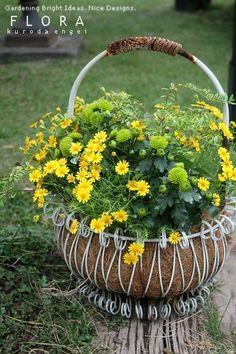 フローラのガーデニング・園芸作業日記-ダールベルグデージーの寄せ植え