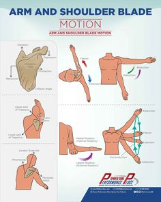 Scaption – Motion in the Scapular plane (roughly 30 degrees forward). Upward Rotation – When the inferior angle of the shoulder blade flares outward way from the midline of the body. Downward Rotation – Opposite of upward rotation. Retraction – Moving the shoulder blades toward the spine, as if to flex the back muscles. Protraction – Moving the shoulder blades away from the spine. Similar to the Hunchback of Notre Dame. Elevation – Moving the shoulder blade up towards yo