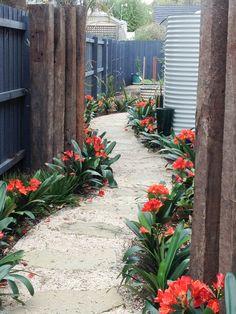 Clivias :Garden designed by Akemi Gardens