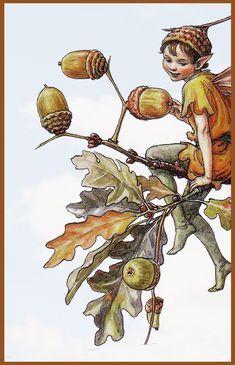 The Acorn Flower Fairy Canvas  Price $69.99