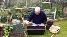 Container Gardening Ideas - Growing Carrots