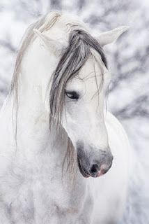 I believe this has got to be the most gorgeous horse I've ever seen!