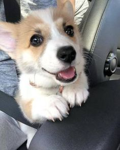 This is a list of some of the cutest Corgi photos. You can add your own special Corgi photos to the list, and you can vote for your favorite pictures of Corgis. Cute Corgi Puppy, Corgi Dog, Cute Dogs And Puppies, Funny Puppies, Baby Corgi, Husky Puppy, Corgi Pictures, Cute Puppy Pictures, Pembroke Welsh Corgi Puppies
