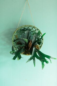 How to decorate with the Hanging Staghorn Fern by Carmen Johnston Gardens