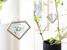 Spotted a pretty bloom? Here's how to press it and keep it forever (or at least a good long while).