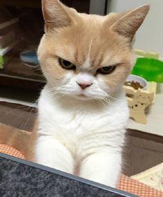 GO AWAY CAT(2)