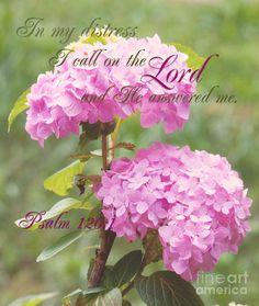 Psalm Verse ©Lena Auxier