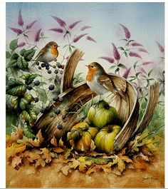 Four Seasons of Robins - by David Finney--Wildlife Artist & Illustrator--Birds