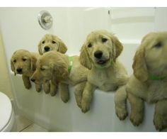 We're waiting for a bath