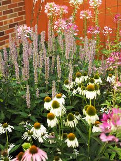 Natives for butterflies! This casually pretty collection combines coneflower, anise hyssop, and cleome. From Better Homes and Gardens.