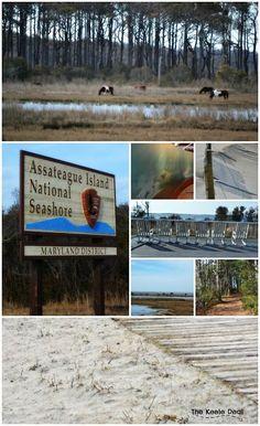 Assateague Island National Seashore, Maryland - Maryland must visit places