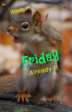 Happy Friday, Animals, Animales, Animaux, Animal, Animais
