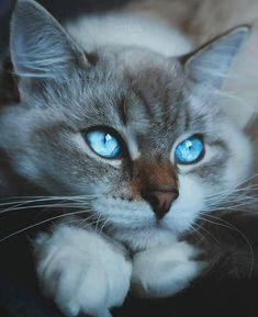Exceptional pretty cats tips are offered on our site. Take a look and you wont be sorry you did. Cute Cats And Kittens, Baby Cats, Kittens Cutest, Funny Kittens, Pretty Cats, Beautiful Cats, Regard Animal, Vida Animal, Cats Diy
