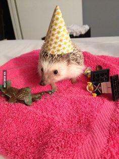 Happy Birthday, Harold! Just don't give him any balloons...