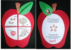 Classroom Freebies: Life Cycle of an Apple Craftivities