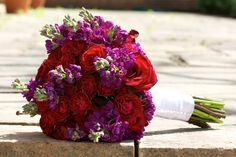 red roses dark purple stock - Google Search