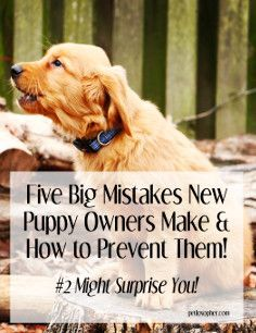 Puppies are adorable, but new puppy owners often make mistakes in the early days. Read about these five mistakes and how to prevent them.