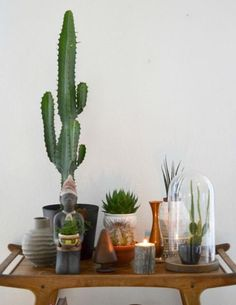 6 Great Ways To Decorate With Plants: Succulents & Cacti