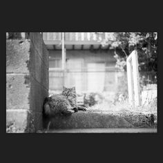 Cat May 2015 #cat #smallcats #blackandwhitephotography