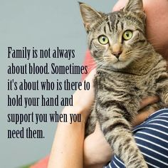There's the dog people and then there's the cat people, and that battle may rage on forever. Cats are social creatures capable of relationships with people and let you love them most. Crazy Cat Lady, Crazy Cats, I Love Cats, Cute Funny Animals, Cute Cats, Funny Cats, Cat Quotes, Animal Quotes, Beautiful Cats