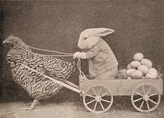 Vintage Clip Art - Funny Easter Bunny Delivering Eggs - The Graphics Fairy Vintage Clip Art, Images Vintage, Vintage Photographs, Vintage Postcards, Funny Vintage Photos, Old Pictures, Old Photos, Funny Pictures, Funny Easter Bunny