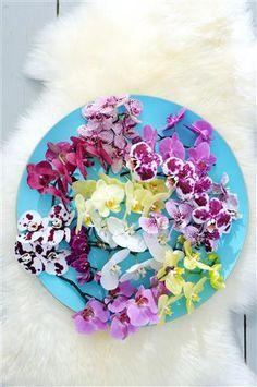Rainbow colours, love it! #phalaenopsis #flowers #orchid #orchidflower #unlimitedincolours