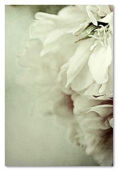 birdsong27:    toda la tarde, flores  by Esther Miguez (emiguez)