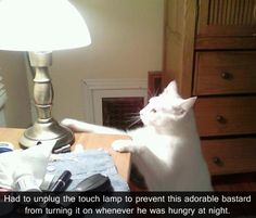 """Had to unplug the touch lamp to prevent this adorable bastard from turning it on whenever he was hungry at night."""
