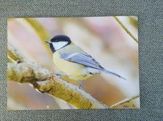 Foto 20 x 30 cm 30th, Birds, Animals, Animales, Animaux, Animal, Animais