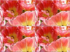 'Wandkacheln Tulpe (1)' von Rudolf Büttner bei artflakes.com als Poster oder Kunstdruck $18.03